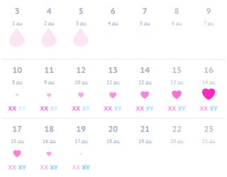 Календарь овуляции и зачатия при плавающем цикле